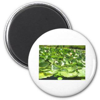 big green lilypads on a pond magnet
