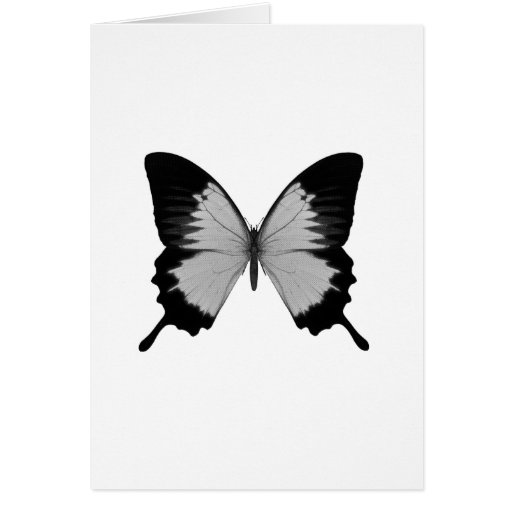 Big Grey & Black Butterfly Cards