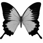 "Big Grey &amp; Black Butterfly Cutout<br><div class=""desc"">Grey &amp; Black Butterfly Design - Lots of other colors available. Makes a cool gift for any girl,  great for birthday parties,  baby and bridal showers and bachelorette parties. Easy to customize and available on hundreds of high-quality Zazzle products.</div>"