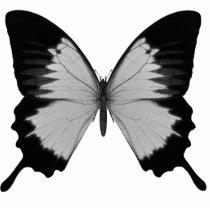 Big Grey & Black Butterfly Cutout