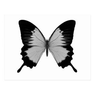 Big Grey Black Butterfly Post Card