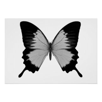 Big Grey & Black Butterfly Poster