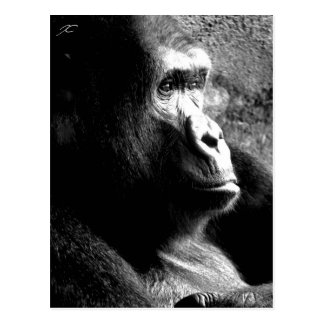 """Big Guy Deep in Thought"" Gorilla Postcard"