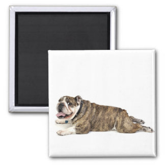 Big Happy Bulldog Magnet