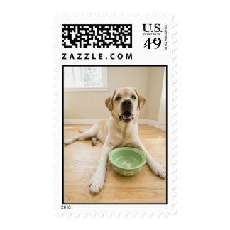 Big Happy Lab Postage Stamp