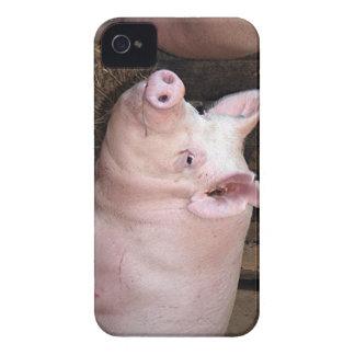 Big happy pink pig iPhone 4 case