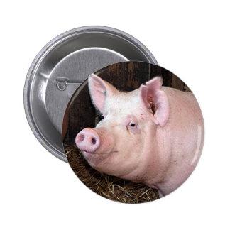 Big happy pink pig pinback button