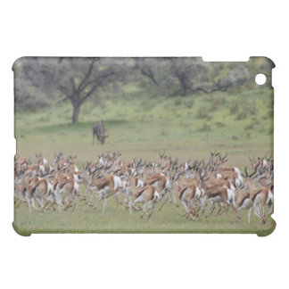 big herd of Springbock, Antidorcas marsupialis, iPad Mini Cover