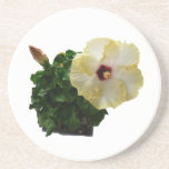 Big Hibiscus Flower with foliage Coaster