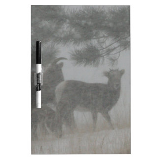 Big Horn Kid in the Snowstorm Dry Erase Board