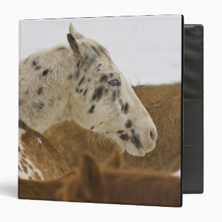 Big Horn Mountains, Horses in The Snow 3 Ring Binder