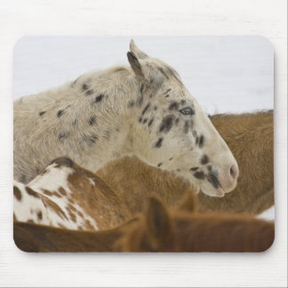 Big Horn Mountains, Horses in The Snow Mouse Pad