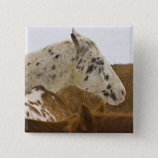 Big Horn Mountains, Horses in The Snow Pinback Button