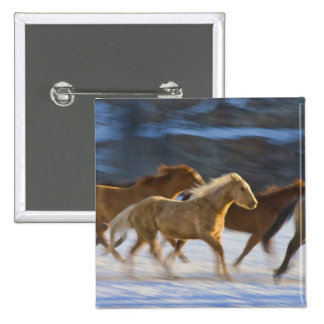 Big Horn Mountains, Horses running in the snow 2 Pinback Buttons