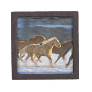 Big Horn Mountains, Horses running in the snow 2 Jewelry Box