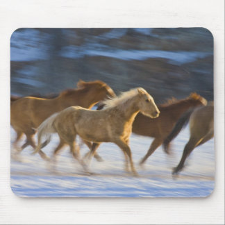 Big Horn Mountains, Horses running in the snow 2 Mouse Pad