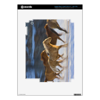 Big Horn Mountains, Horses running in the snow 2 Skins For iPad 3