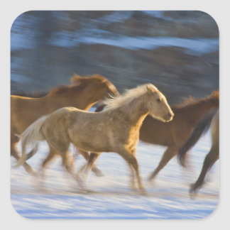 Big Horn Mountains, Horses running in the snow 2 Sticker