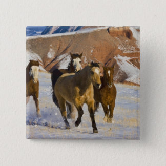 Big Horn Mountains, Horses running in the snow 3 Button