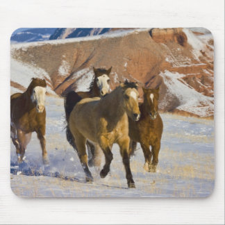 Big Horn Mountains, Horses running in the snow 3 Mouse Pad