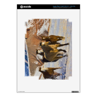 Big Horn Mountains, Horses running in the snow 3 Skins For iPad 3