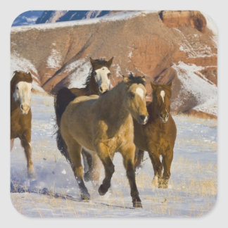 Big Horn Mountains, Horses running in the snow 3 Square Sticker