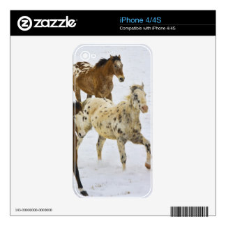 Big Horn Mountains, Horses running in the snow 4 Decal For iPhone 4