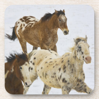 Big Horn Mountains, Horses running in the snow 4 Drink Coaster