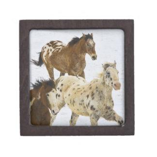 Big Horn Mountains, Horses running in the snow 4 Keepsake Box
