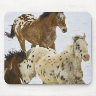 Big Horn Mountains, Horses running in the snow 4 Mouse Pad