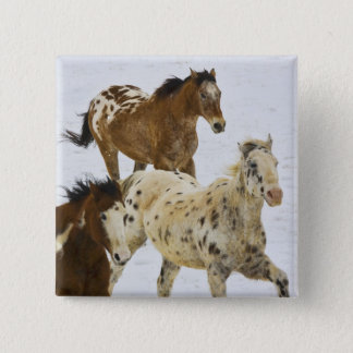 Big Horn Mountains, Horses running in the snow 4 Pinback Button