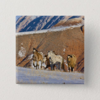 Big Horn Mountains, Horses running in the snow Button