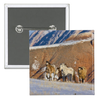 Big Horn Mountains, Horses running in the snow Pinback Button