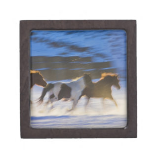 Big Horn Mountains, Horses Running in the Snow Gift Box