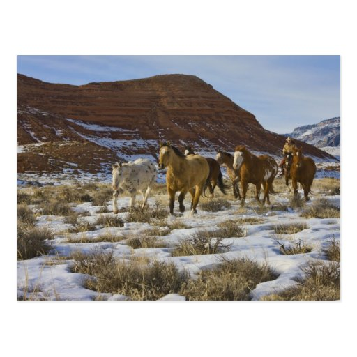 Big Horn Mountains, Horses Running in The Snow Post Card