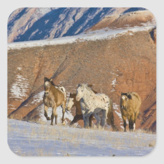 Big Horn Mountains, Horses running in the snow Sticker
