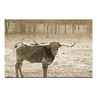 Big Horn Art Photo