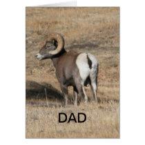Big Horn Ram Dad