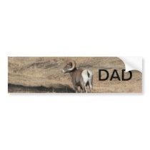 Big Horn Ram Dad Bumper Sticker