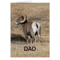 Big Horn Ram Dad Card
