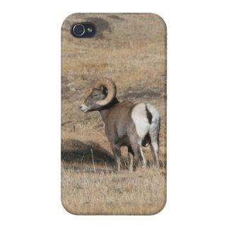 Big Horn Ram iPhone 4 Cover