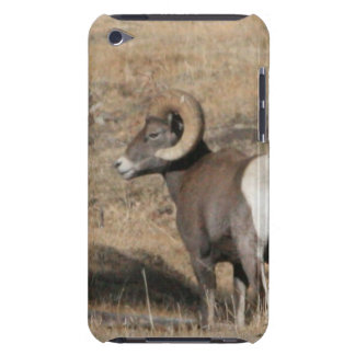 Big Horn Ram iPod Barely There Case