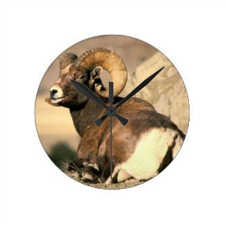 Big Horn Ram, Part of the American Mammal Series Wall Clocks