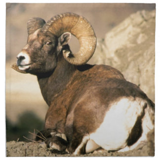 Big Horn Ram, Part of the American Mammal Series Cloth Napkin