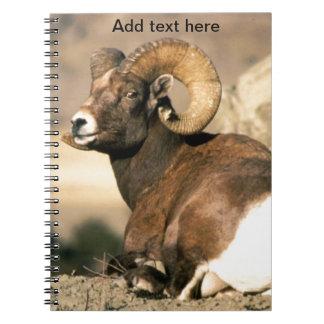 Big Horn Ram, Part of the American Mammal Series Notebook