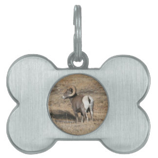 Big Horn Ram Pet ID Tag