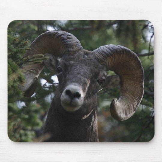 Big Horn Sheep1 Mouse Pad