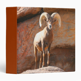Big Horn Sheep 3 Ring Binder