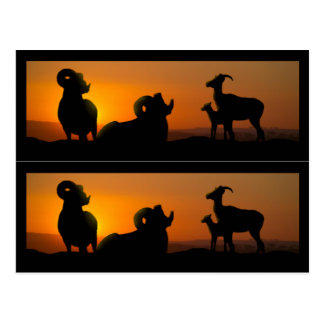 Big Horn Sheep Book markers Postcard