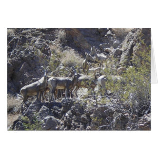 """Big Horn Sheep Group Discussion"" Willow Beach, NV Card"